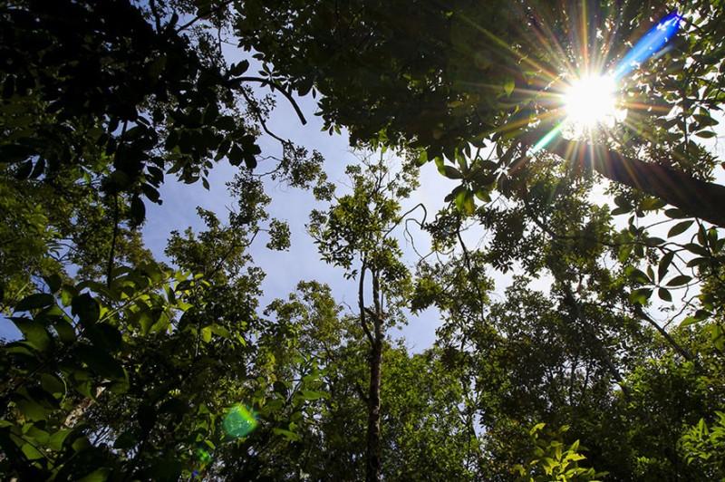 forêt, Togo, Lacs, préfecture