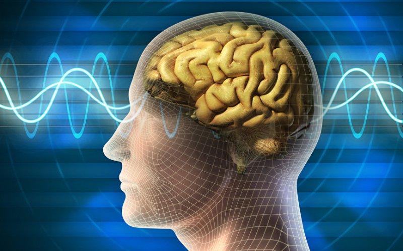 cerveau, vieillissement, facteur
